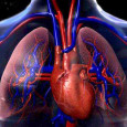 About this Research Topic Recent findings show the potential role of insulin signaling in cardiovascular health, related with insulin receptors expression in cardiomyocytes and vascular cells. The epidemiological data show […]